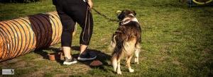 quereinsteiger hundetraining april