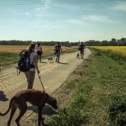 hundewanderung püchau