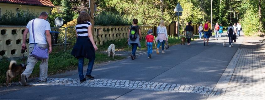 hundewanderung am kohlenberg