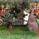 weihnachten 19 ridgeback