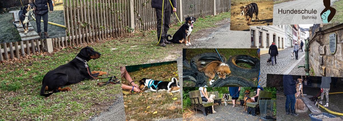 hunde gruppentraining