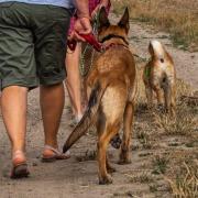 Hunde im Alltagstraining